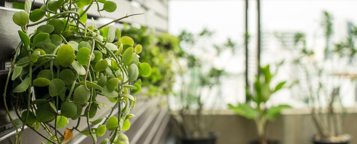vertical garden DIYs